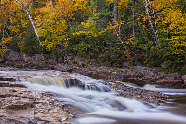 Trees in autumn along river, Sand River, Agawa Bay, Ontario, Canada