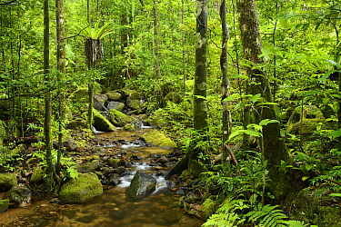 Stream in lowland rainforest, Masoala National Park, Antsiranana, Madagascar