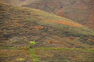 Deforested and overgrazed hillsides, Madagascar