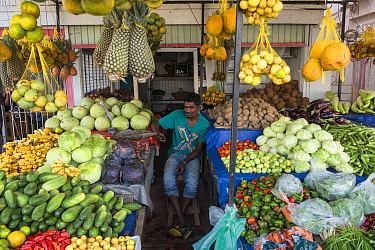 Fruit and vegetable vendor, Georgetown, Guyana