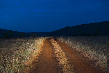 Dirt road in savanna at dusk, Rupununi, Guyana