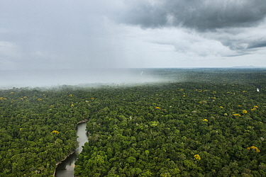 Rain falling over rainforest, Essequibo River, Rupununi, Guyana