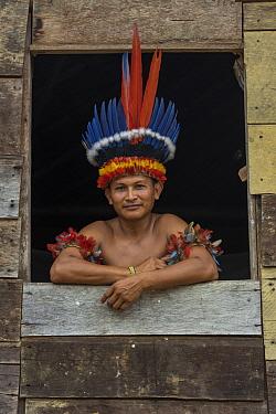 Scarlet Macaw (Ara macao) feathers used in headdress by Wai-wai men, Guyana