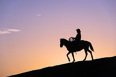 Cowboy at sunset, Rupununi, Guyana