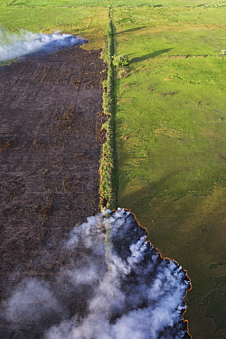 Wildfire in savanna east of Georgetown, East Demerara Conservancy, Guyana