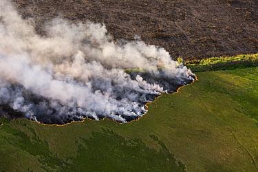 Wildfire on savanna east of Georgetown, East Demerara Conservancy, Guyana