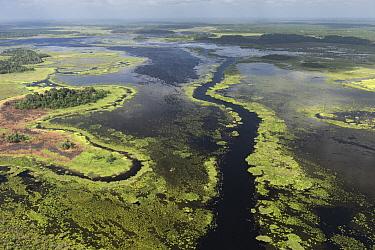 Coastal wetland, Abari Swamps, Guyana