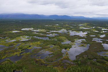 Lakes in taiga, Putoransky State Nature Reserve, Putorana Plateau, Siberia, Russia