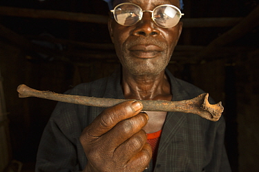 Bonobo (Pan paniscus) bone held by man, this bone is passed on through generations with the belief that it will give a newborn strength when bathing with the bone, Democratic Republic of the Congo