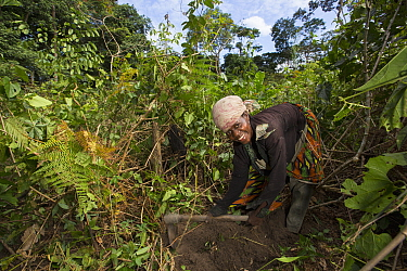 Bonobo (Pan paniscus) conservationist clearing selected area for agriculture, but allowing for greater forest protection for the apes, Democratic Republic of the Congo