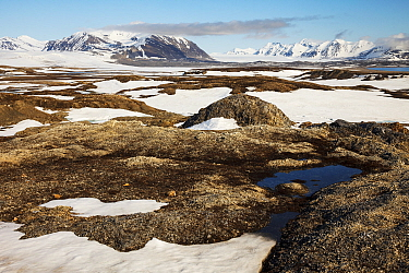 Tundra with last snow in summer, Spitsbergen, Svalbard, Norway