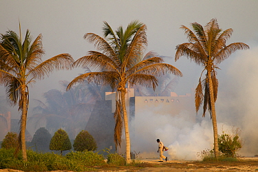 Man spraying pesticides in hotel grounds, Salalah, Oman