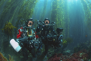 Giant Kelp (Macrocystis pyrifera) forest, with Howard and Michele Hall, renowned underwater filmmakers, California