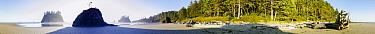 Sea stacks along coast, Olympic National Park, Washington