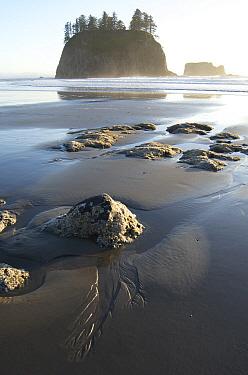 Sea stacks along coast at sunset, Olympic National Park, Washington