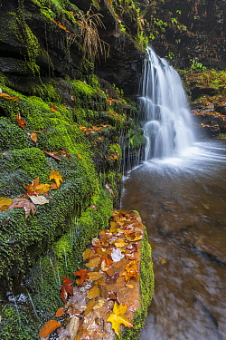 Waterfall and creek in fall, Cayuga Falls, Kitchen Creek, Ricketts Glen State Park, Pennsylvania
