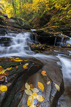 Waterfall and creek in autumn, Cayuga Falls, Kitchen Creek, Ricketts Glen State Park, Pennsylvania