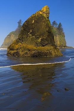 Seastack on coast, Ruby Beach, Olympic National Park, Washington
