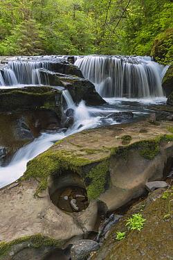 Waterfall, Sweet Creek, Siuslaw National Forest, Oregon