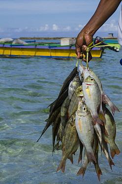 Caught fish, Biak Island, West Papua, Indonesia