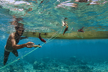 Local fishermen pulling in net with caught fish, Half Island, Cenderawasih Bay, West Papua, Indonesia