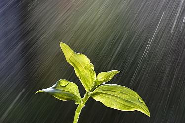 Plant during rain, Japan