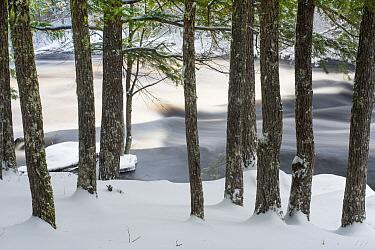 River and trees in winter, Mersey River, Kejimkujik National Park, Nova Scotia, Canada