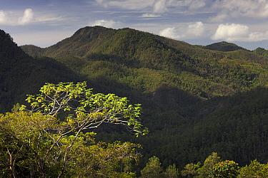 Forested hillsides, Alexander von Humboldt National Park, Cuba