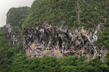 Weathered limestone cliff, Vinales Valley, Cuba