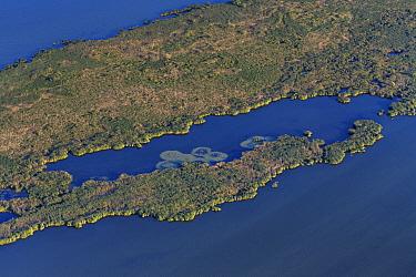 Reed island, Danube Delta, Romania