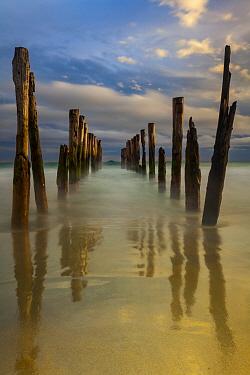 Old wharf pilings, Dunedin, Otago, South Island, New Zealand
