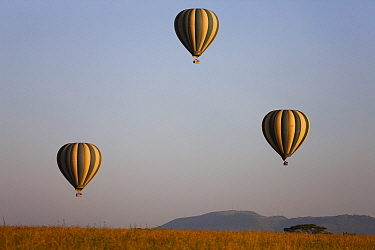 Hot air balloons over grassland, Serengeti National Park, Tanzania