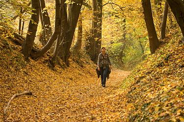 Woman hiking through forest in autumn, Saint Martens Voeren, Voerstreek, Belgium