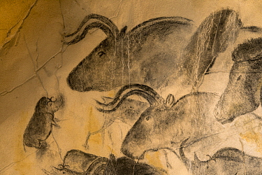 Reproduction of Chauvet-Pont-d'Arc Cave paintings showing ice age wildlife