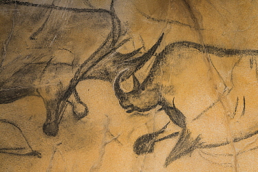Woolly Rhinoceros (Coelodonta antiquitatis) pair in Chauvet-Pont-d'Arc Cave painting