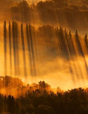 Trees at sunrise, Belgium