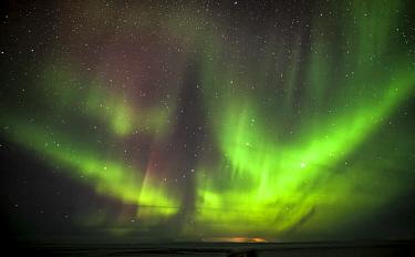 Northern lights, Myvatyn, Iceland