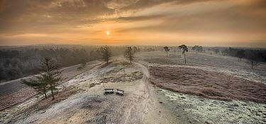 Heathland at sunrise, De Maasduinen National Park, Netherlands
