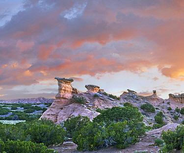 Sandstone pinnacles, New Mexico