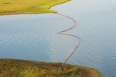 Oil containment boom, Queen Bess Island, Louisiana