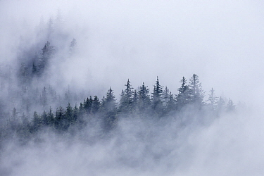 Coniferous forest and clouds, southeast Alaska