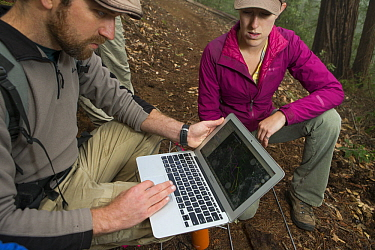 Mountain Lion (Puma concolor) biologists, Paul Houghtaling and Justine Alyssa Smith, using satellite data to determine location of den, Santa Cruz Puma Project, Henry Cowell Redwoods State Park, Santa...