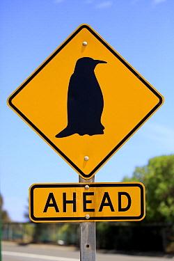 Little Blue Penguin (Eudyptula minor) traffic sign, Kangaroo Island, South Australia, Australia