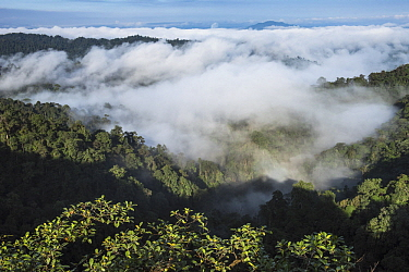 Cloud forest, Mashpi Rainforest Biodiversity Reserve, Pichincha, Ecuador