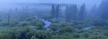 River at dawn, Big Hole River, Big Hole National Battlefield, Montana