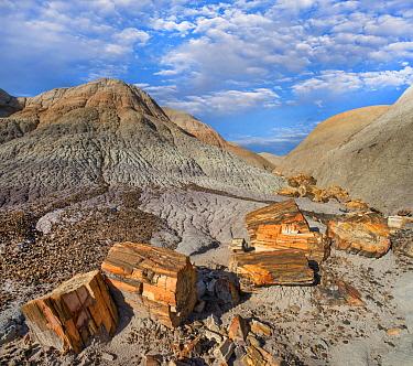 Petrified logs, Blue Mesa, Petrified Forest National Park, Arizona