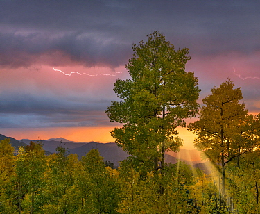 Lightning over deciduous forest at sunset, Santa Fe National Forest, New Mexico