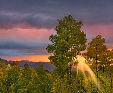 Thunderstorm over deciduous forest at sunset, Santa Fe National Forest, New Mexico