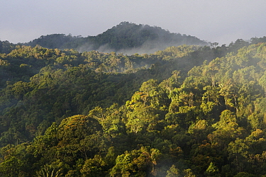 Cloud forest in mist, Madagascar