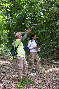Cotton-top Tamarin (Saguinus oedipus) biologists, Francy Forero and Felix Medina, tracking collared animal, Proyecto Titi, Colombia